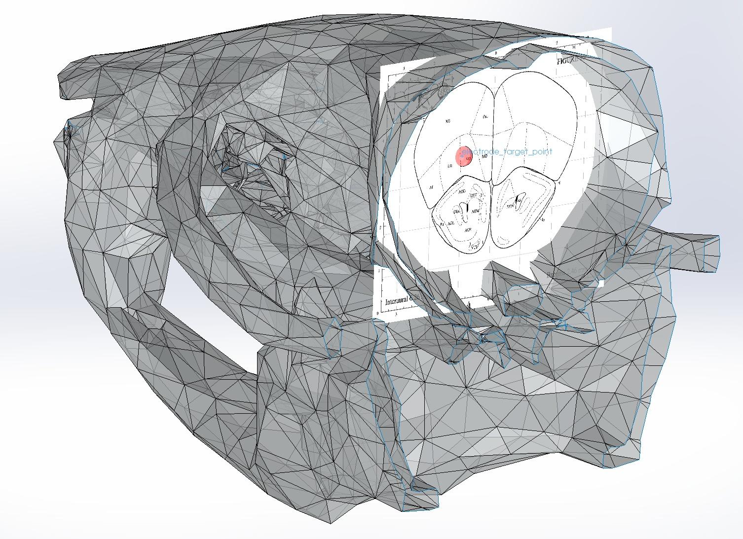 skull+atlas.jpg